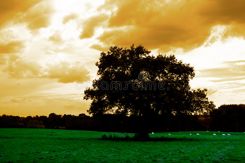 Lone tree in field stock images