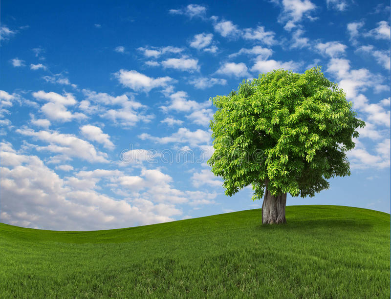 Lone tree on the field with blue sky. Beautiful landscape with a lone tree on blue sky and green field royalty free stock images