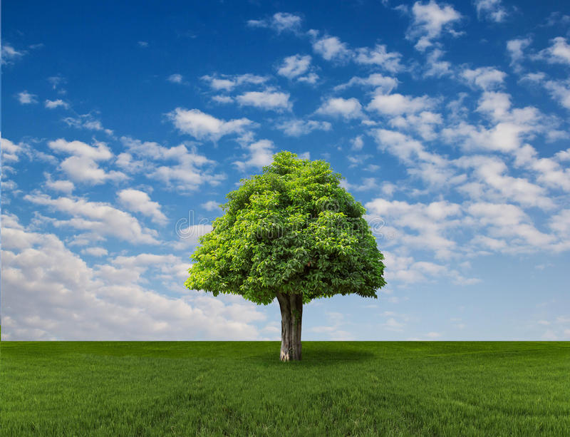 Lone tree on the field with blue sky. Beautiful landscape with a lone tree on blue sky and green field stock photo