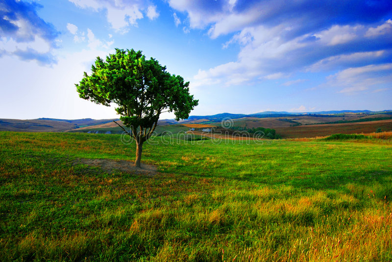 Lone tree and fields stock photography