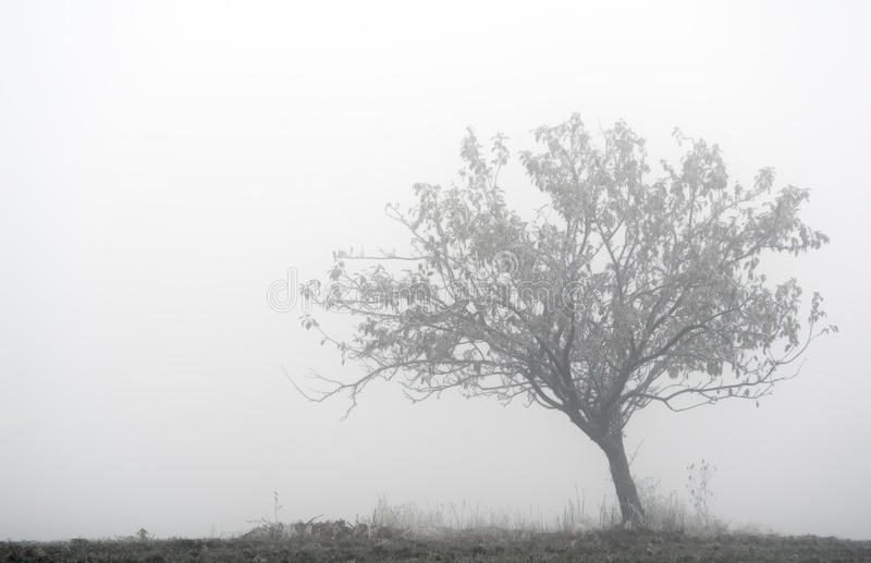 Lone tree in the fog stock photos