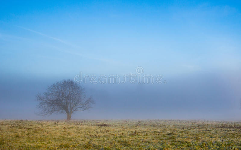 Lone Tree in Fog. A lone tree in a French countryside in a winter morning stock image