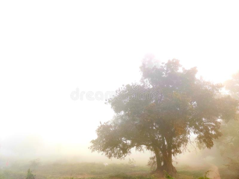 A lone tree in a fog stock images