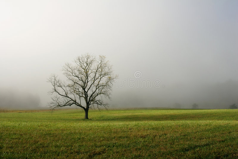 Lone Tree in Foggy Field royalty free stock photography