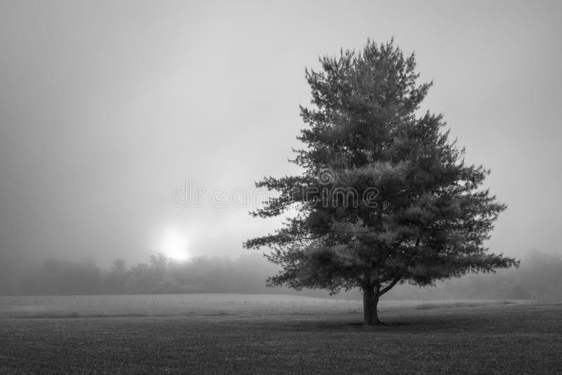 A lone tree with a foggy sunrise Great Smoky Mountain National Park. A lone tree with a foggy sunrise, cades cove The Great Smoky Mountain National Park royalty free stock photography