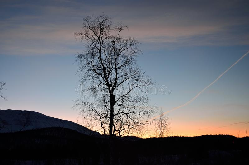 Lone tree in front of colorful dawn sky stock images