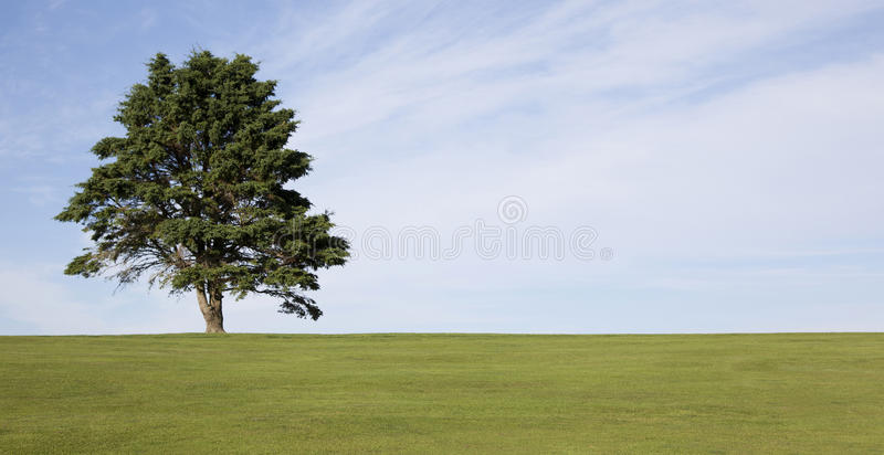 Lone Tree On Golf Course Stock Images