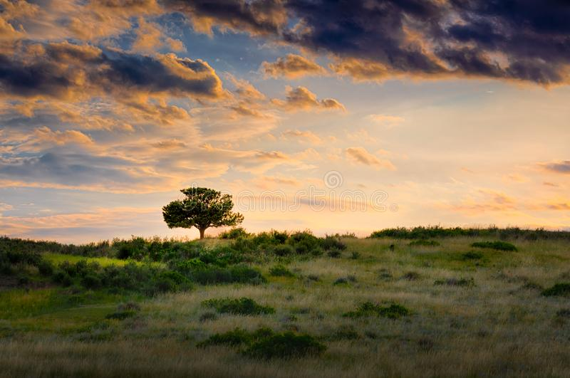 Lone Tree on a Grass Hill. A lone tree atop a small hill in an open field at sunset royalty free stock images