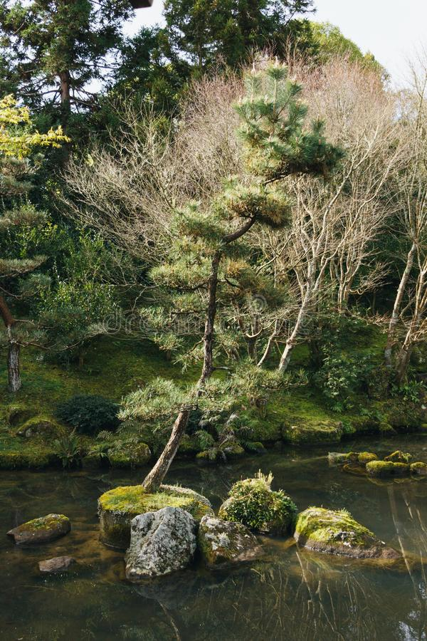 Lone tree in chinese gardens. A lone tree growing in the middle of a stream, shot taken in NZ at a Chinese garden stock image