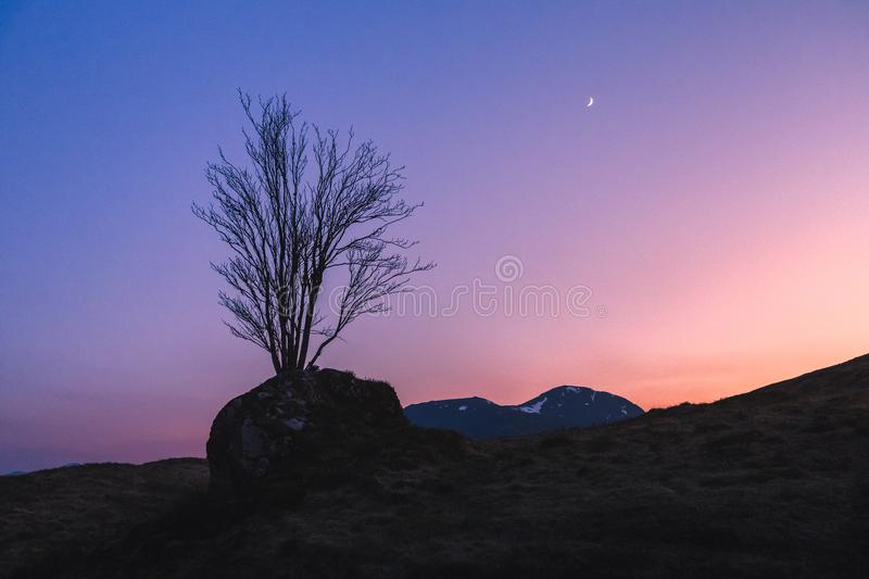 A lone tree grows on a rock in Glencoe, Scotland at blue hour with a sliver moon in the colorful sky. A tree grows on top of a rock in a field Glencoe, Scotland stock photos