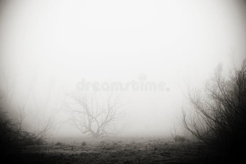 Lone tree. In heavy fog royalty free stock photography