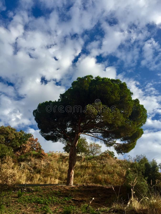 Lone tree. On a hill with blue sky stock photos