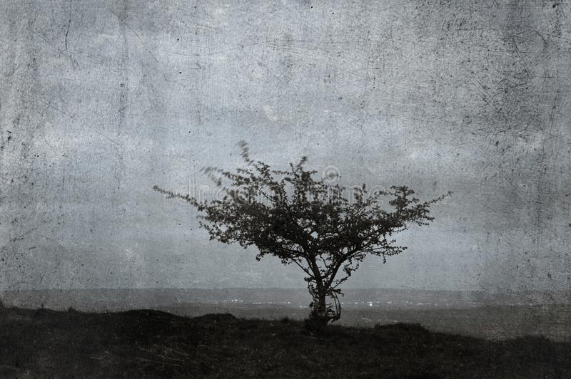 A lone tree on a hillside with the lights of a town in the background. With a textured, weathered, vintage edit royalty free stock image