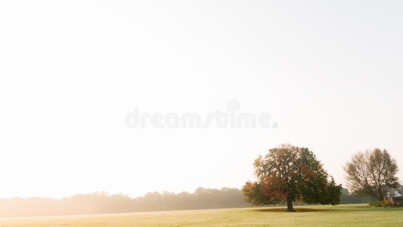 Lone tree on horizon royalty free stock images