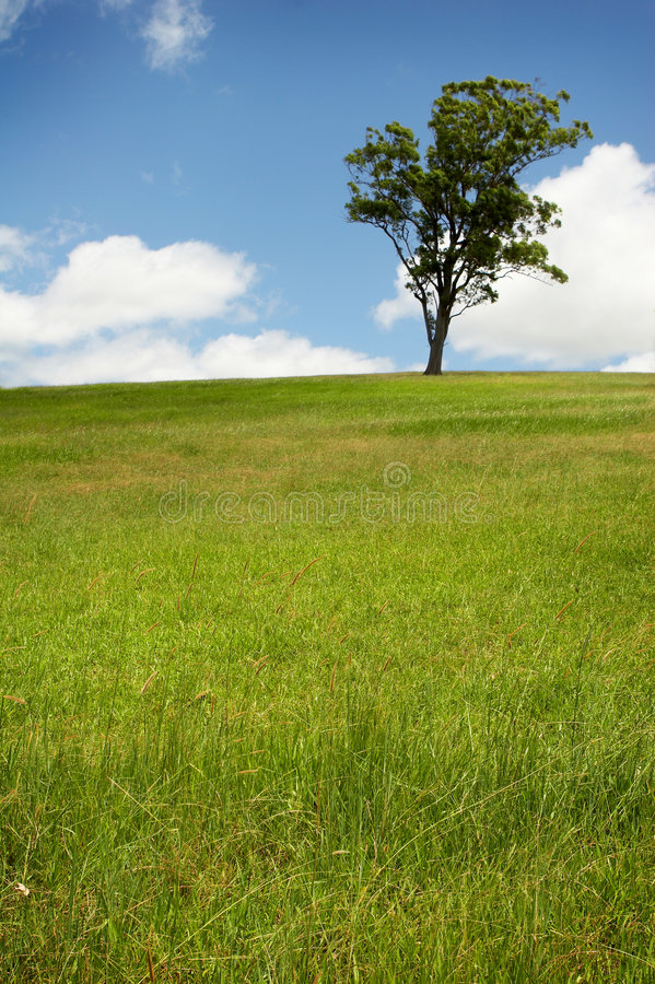 Free Lone Tree In Green Field Royalty Free Stock Photography - 8503027