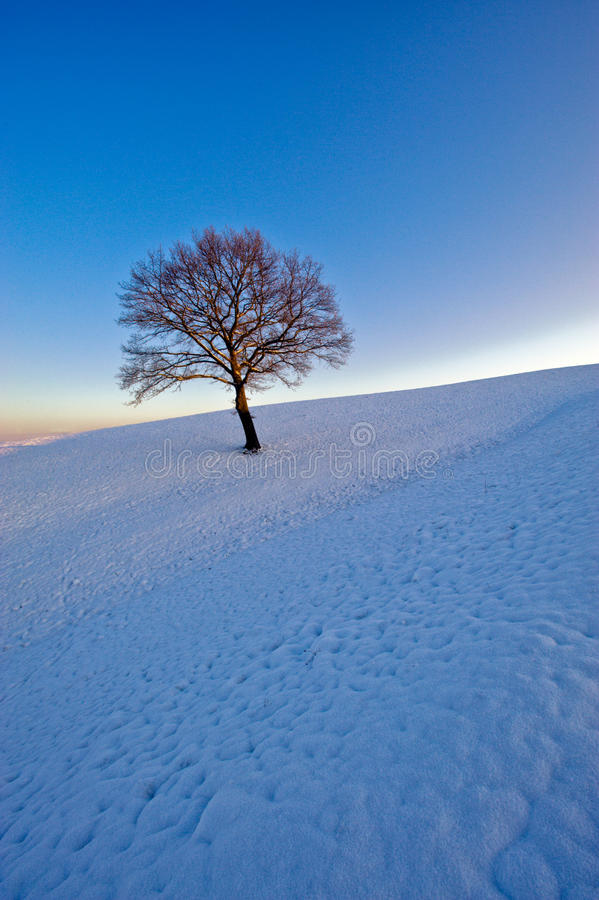Free Lone Tree In Winter Stock Images - 12227664