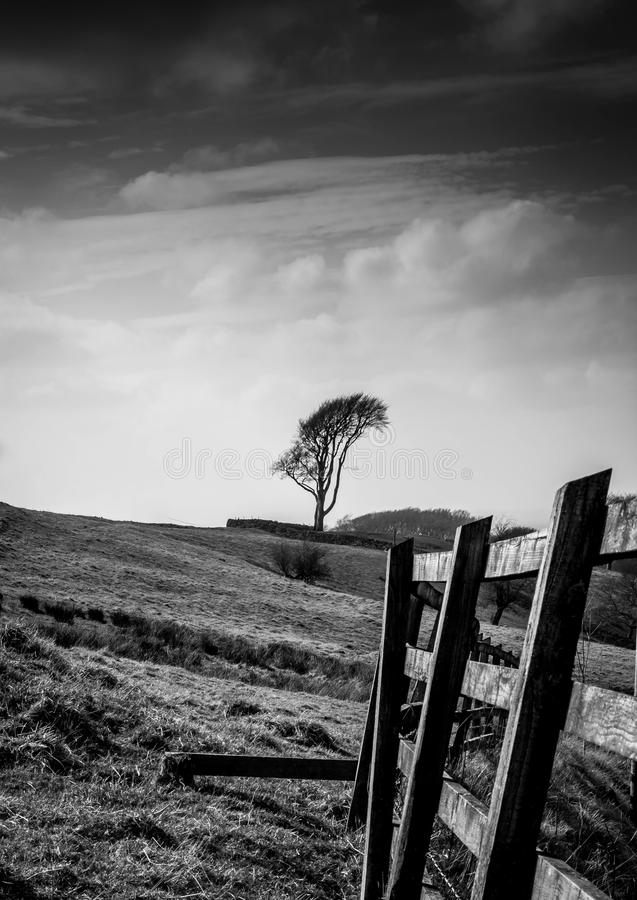 Lone tree in isolated field. Lone tree in isolated setting stock image