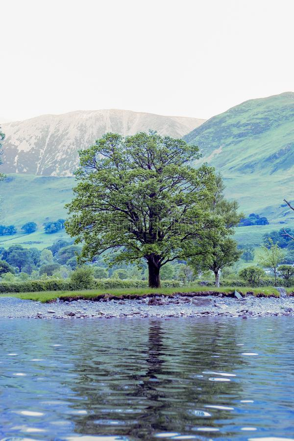 Lone tree on lake shore stock photography