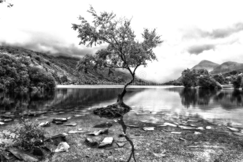 The Lone Tree - Llanberis North Wales UK. Llyn Padarn - Llyn Padarn, a site of Special Scientific Interest, is situated in the Llanberis Pass and nestles below royalty free stock images