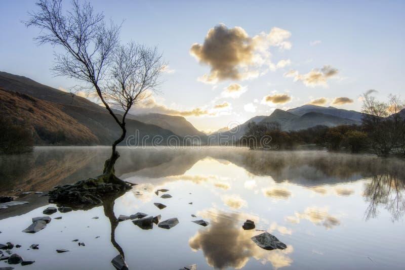 Lone Tree - Llanberis Północna Walia Wielka Brytania obrazy royalty free