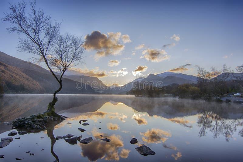 Lone Tree - Llanberis Północna Walia Wielka Brytania obrazy stock