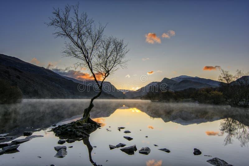 Lone Tree - Llanberis Północna Walia Wielka Brytania fotografia royalty free
