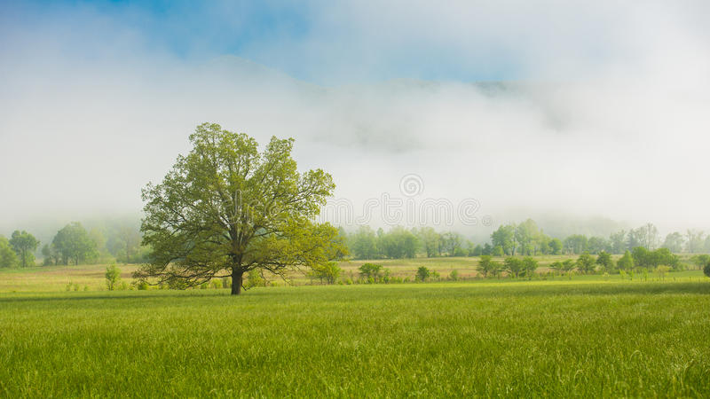 A lone tree Great Smoky Mountain National Park. A lone tree in a meadow on a foggy morning, Cades Cove, The Great Smoky Mountain National Park stock images