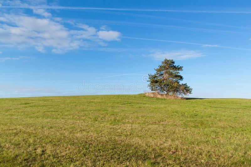 A lone tree on a meadow. Morning sky and condensation traces of planes. Spring sky royalty free stock photography