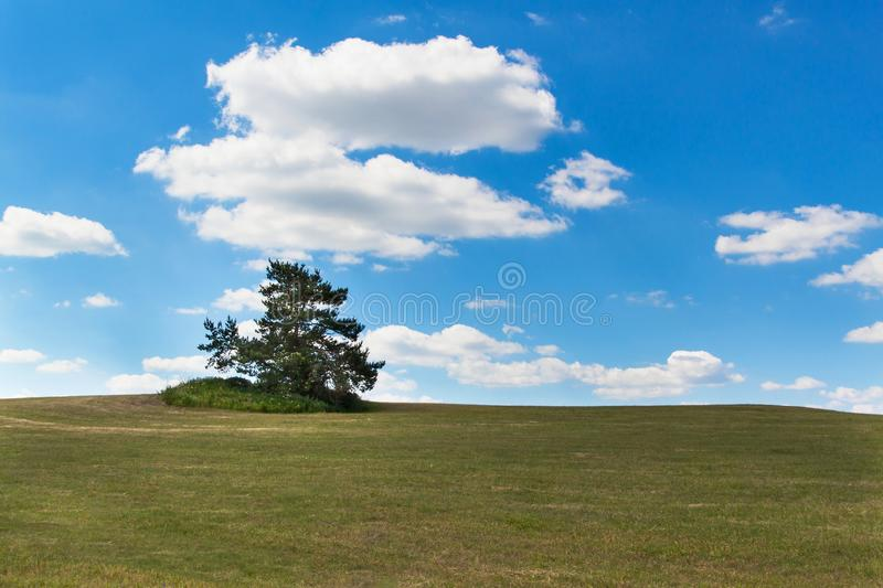 A lone tree on a meadow. Pine tree on the horizon against a blue sky. Summer day. stock photos