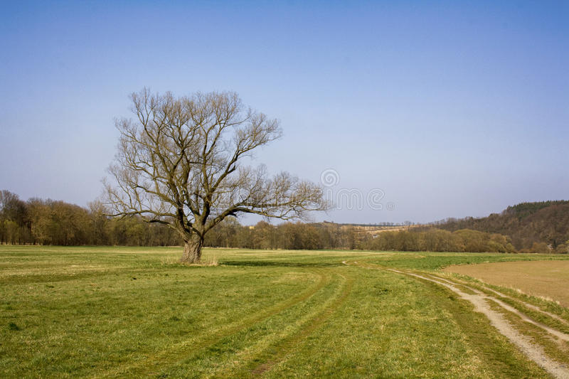 Lone tree. In the middle of a field royalty free stock image