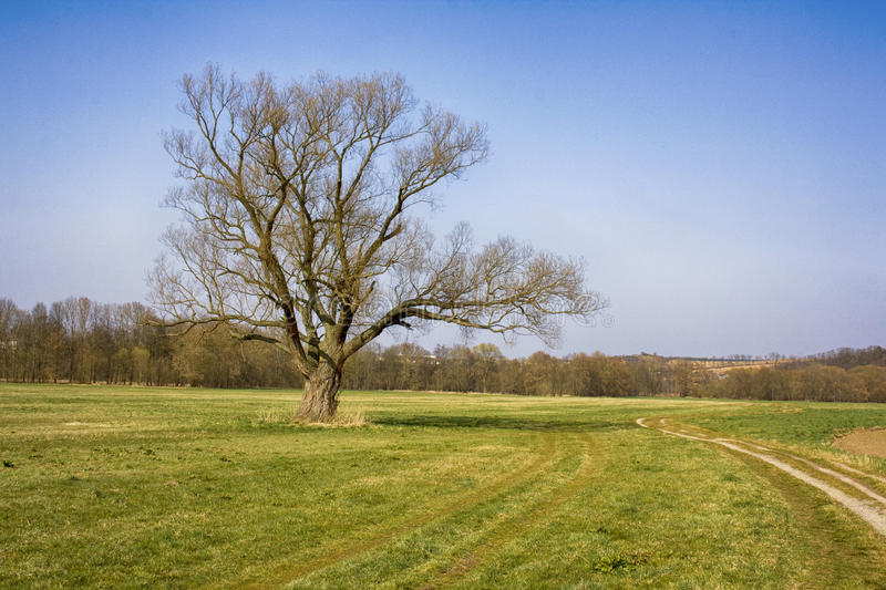 Lone tree. In the middle of a field stock photos