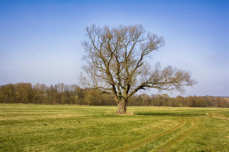 Lone tree. In the middle of a field royalty free stock images