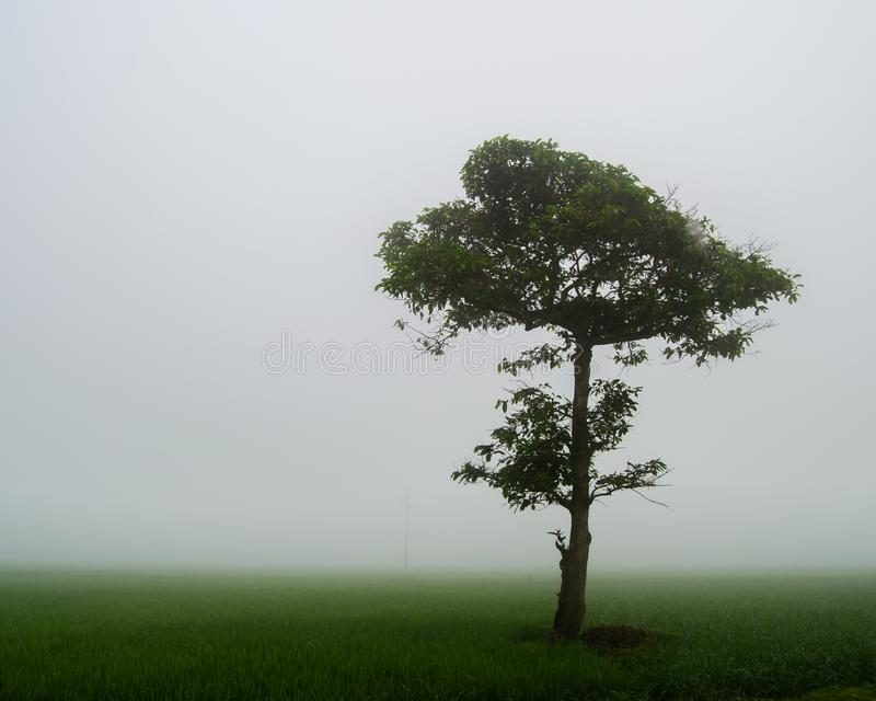 Lone tree in the middle of misty meadow. A Lone tree in the middle of misty meadow. A tree standing alone in the middle of the meadow royalty free stock photography