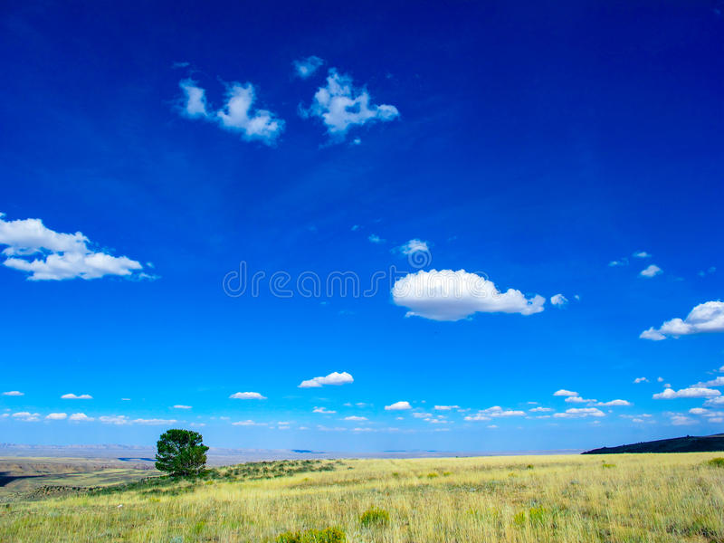 Lone Tree on Middle Mountain in Northwest Colorado royalty free stock images