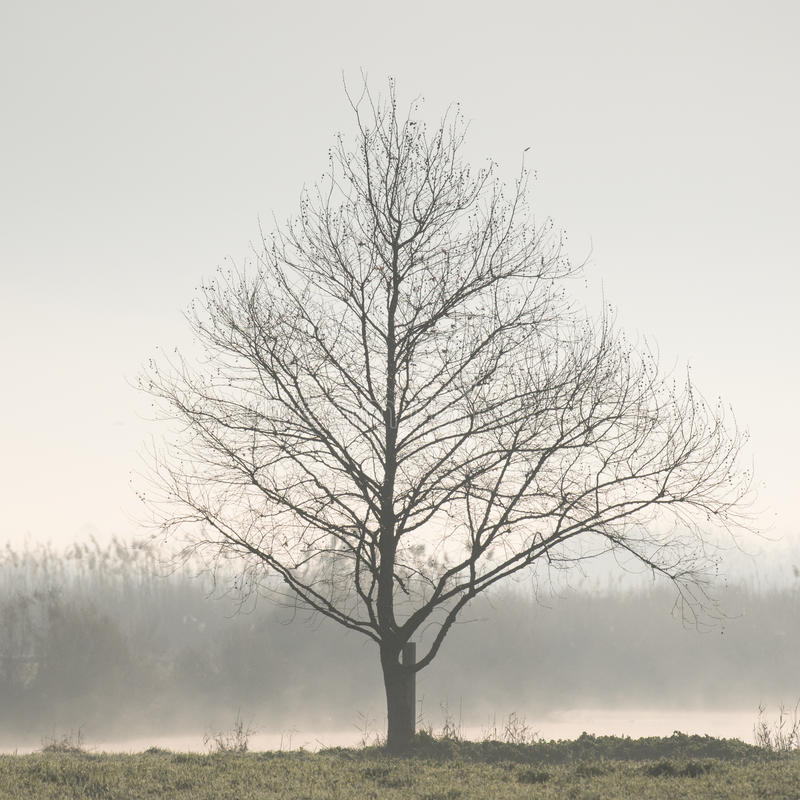 Lone Tree. A lone tree in a mist near water royalty free stock photography