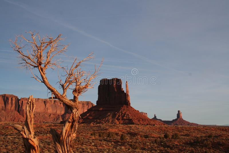 Lone tree in monument valley stock photo