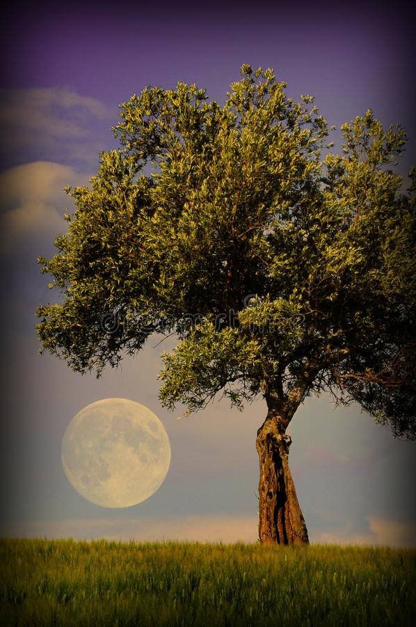 Lone tree and moon royalty free stock photography