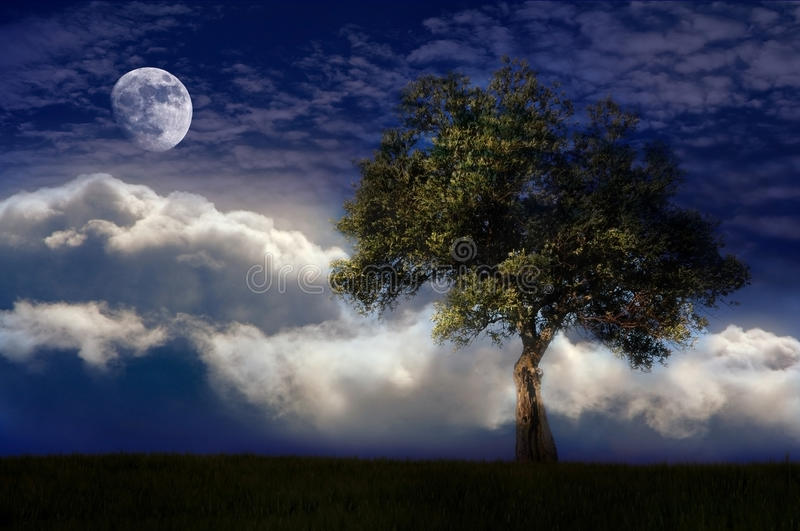 Lone tree in the night stock photography