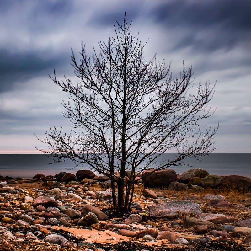 Lone tree royalty free stock photography
