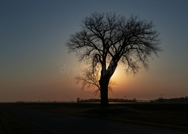 Lone Tree & a Prairie Sunset royalty free stock image