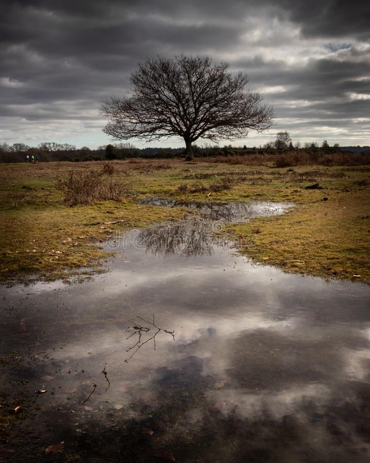 A lone tree reflecting in a river with storm clouds royalty free stock photo