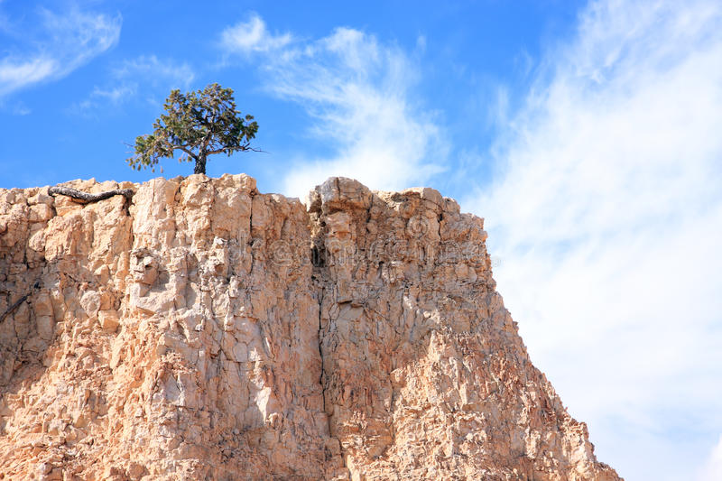 Lone Tree On Rocky Cliff Stock Image