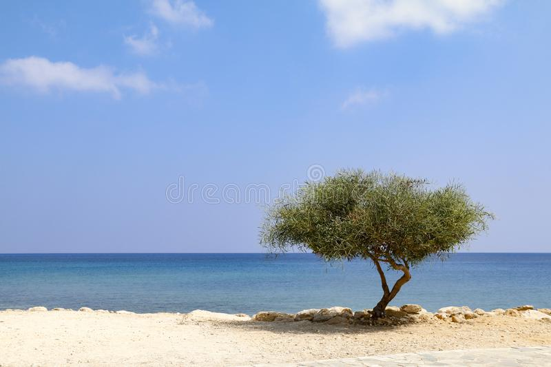 Lone tree beside sea on sunny day with blue sky stock images