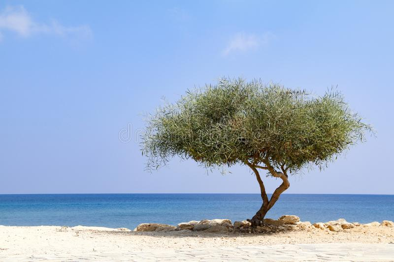 Lone tree beside sea on sunny day with blue sky stock photo