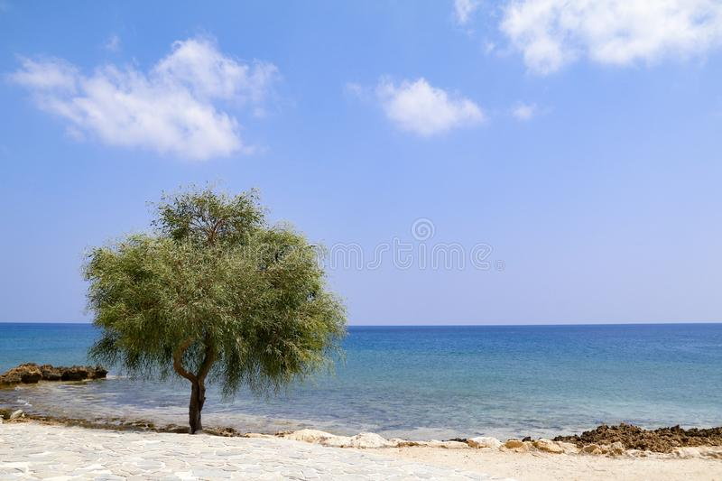 Lone tree beside sea on sunny day with blue sky stock photography