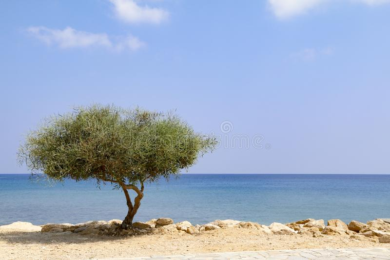 Lone tree beside sea on sunny day with blue sky stock photos