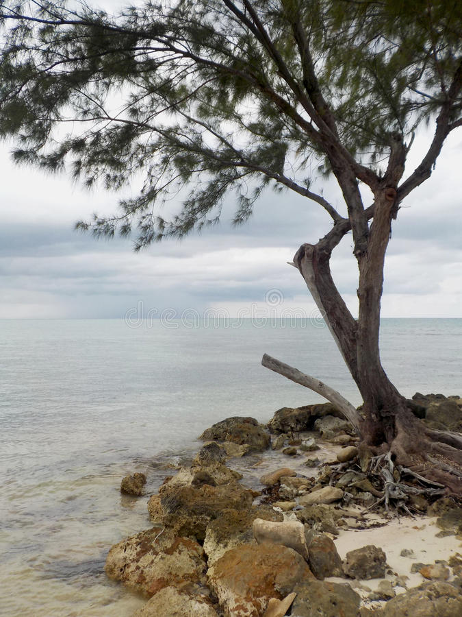 Lone Tree by the Shore stock photo