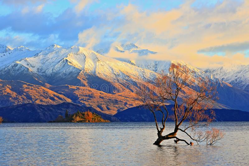 The Lone Tree Famous Lake Wanaka Landmark. The Lone tree, a single tree that grows over the waters of Wanaka Tree is one of the most instagrammable objects on royalty free stock images