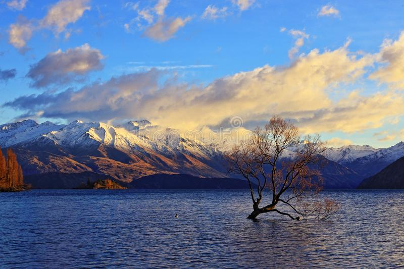 The Lone Tree Famous Lake Wanaka Landmark. The Lone tree, a single tree that grows over the waters of Wanaka Tree is one of the most instagrammable objects on royalty free stock photos