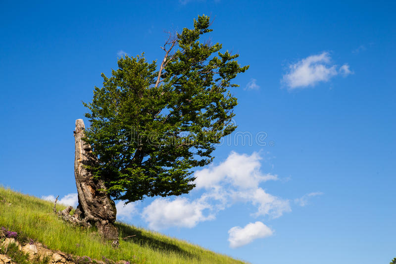 Lone Tree sky. Lone tree, blue sky and white clouds royalty free stock images